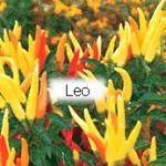 Leo Chile